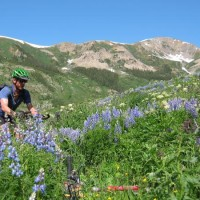 Enjoying the wildflowers in Crested Butte