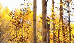 yellowbrickroadcbmr