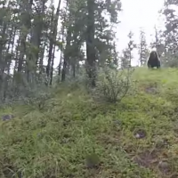 grizzchargemtb
